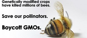 Boycott-GMOs-for-the-bees
