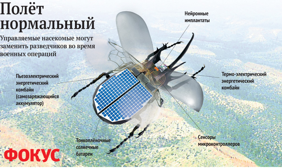 insects drones 2