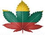 stock-photo-the-lithuanian-flag-painted-on-cannabis-or-marijuana-leaf-120387160