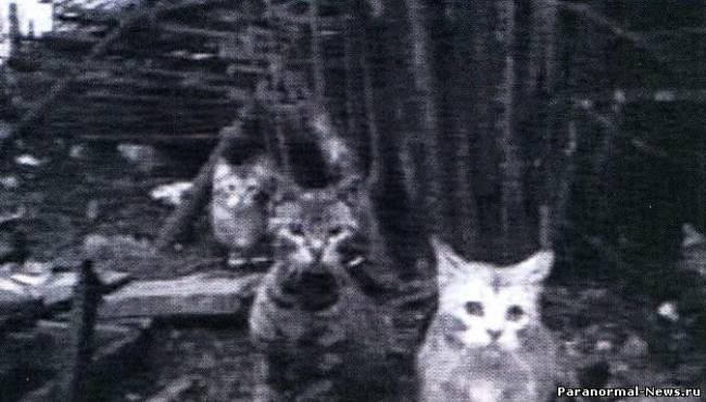 cats est