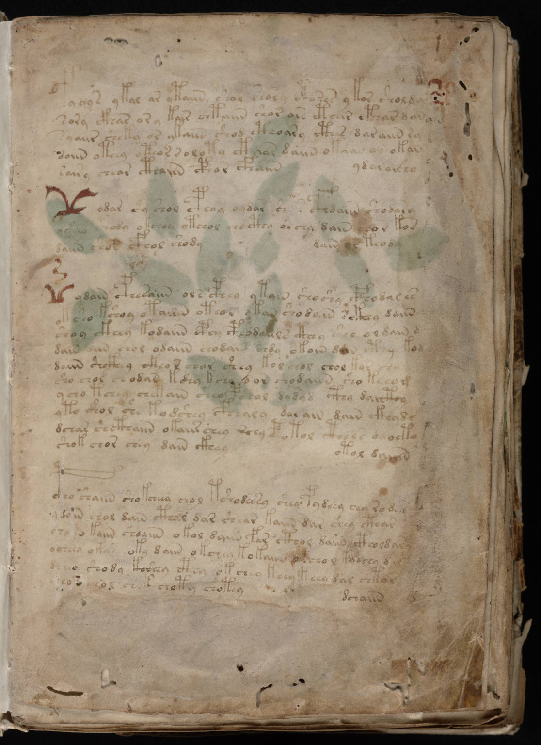 Voynich_Manuscript